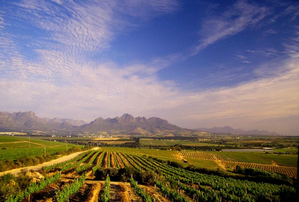 Stellenbosch Tours